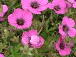 Flower (25)